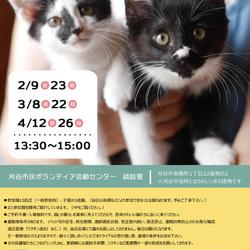 【開催中止です!!】 刈谷市で開催!!猫の譲渡会 サムネイル1