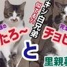 【保護猫5期生♡ゲンたろ&チョビ様】