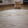 白血病の猫くん里親募集