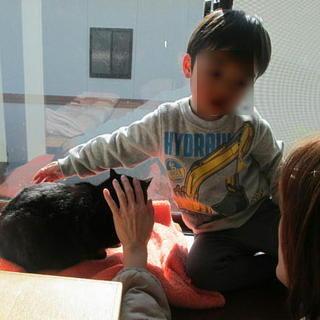 血液検査・不妊手術等済み大きめの大人しい猫