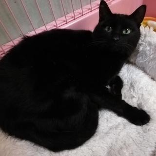 左前足首の神経が麻痺している黒猫です
