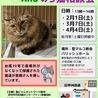 猫の譲渡会and野良猫相談会