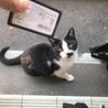 学校に住み着いていて殺処分されそうになっていた猫