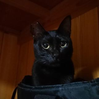 黒猫の女の子です☆