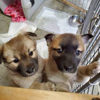 よちよち歩きの子犬の姉妹が家族を待ってます