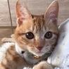 つくね♪甘えん坊な茶トラの子猫♪男の子