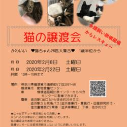 猫の譲渡会 横須賀多頭飼い崩壊現場からレスキュー