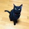 好奇心旺盛で遊ぶことが大好きな黒猫の子猫♡