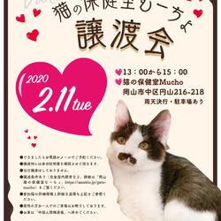 猫の譲渡会@猫の保健室Mucho