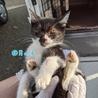 子猫(③男の子)