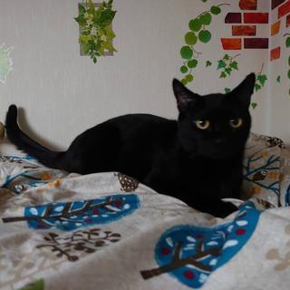 性格よし 黒猫まつむらくん 愛知から