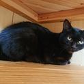 黒猫みこちゃんの里親さんを探してます!