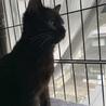 人馴れ抜群!賢い黒猫の女の子♀