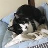 クロシロの猫 家族になってもらえる方募集中❗️