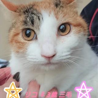リコちゃん3歳おっとり女子♡
