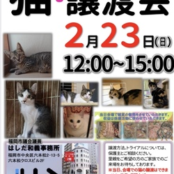 猫☆譲渡会