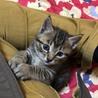 子猫の里親大募集中