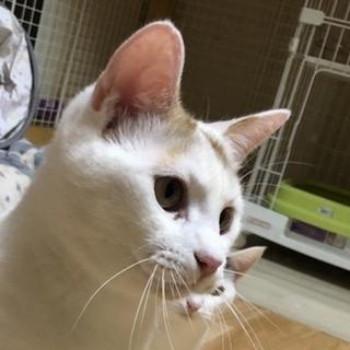 猫どうし仲良くなれる元気ボーイ!仮名:暫平☆