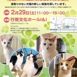 【中止のお知らせ】猫の里親譲渡会