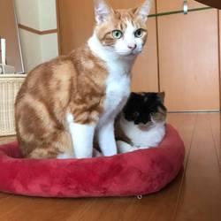 【中止のお知らせ】猫の里親譲渡会 サムネイル2