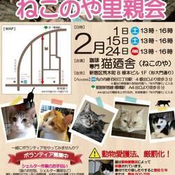 2月24(月祝) 四谷猫廼舎 里親会(ボランティア募集中) サムネイル1