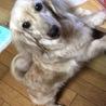 ☆甘えん坊のまかろんちゃん☆5歳 サムネイル2