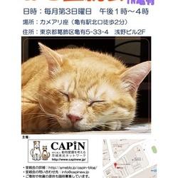 【開催中止】CAPIN ねこ里親会(譲渡会)in亀有 サムネイル1