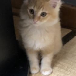 三重県桑名市2月9日(日)第103回リトルパウエイド猫の譲渡会