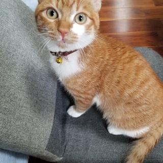 宮古島8ヶ月の子猫ちゃん