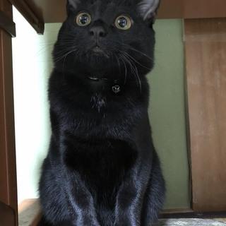 【仮名 ミン】オスの黒猫の雑種です!