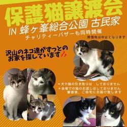 第7回 保護猫譲渡会IN山口県