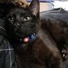 二代目黒猫ロク さん