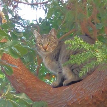 木登り大好き!スーちゃん!