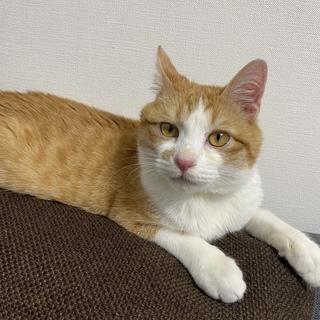 ヤンチャ盛りの猫ちゃんです!