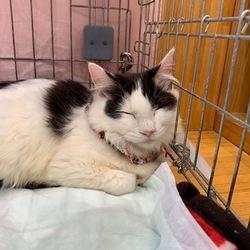 保護猫の譲渡会❤️久米川みどり動物病院 サムネイル3