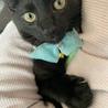 側溝に落ちていた黒猫ひのでちゃん