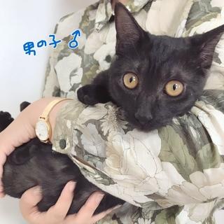 甘えんぼの黒しま仔猫