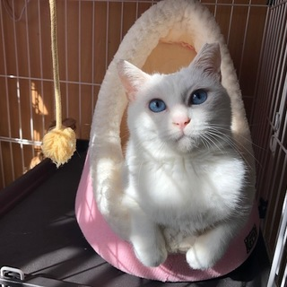 豊満ボディの悩殺エアふみふみ♫甘ったれブルー瞳女子