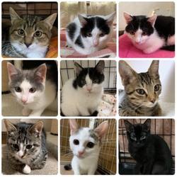 保護猫の譲渡会&チャリティーグッズ同時販売 サムネイル2