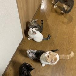 保護猫の譲渡会&チャリティーグッズ同時販売 サムネイル3