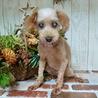 にいみ)お利口さんで可愛いおばあちゃん犬 サムネイル2