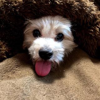 1歳のミックス小型犬の男の子!