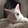 ハンディ猫 とても気さくなブランコ君 6ヵ月 サムネイル5