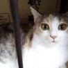 美猫のコミちゃん サムネイル2