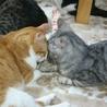 超甘えん坊のデカ猫&子猫お世話大好きな五郎蔵さん サムネイル4