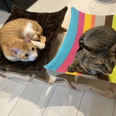 猫用のハンモックを先月購入しました^ ^