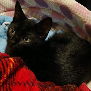 甘えんぼの黒猫♡りんちゃん♡