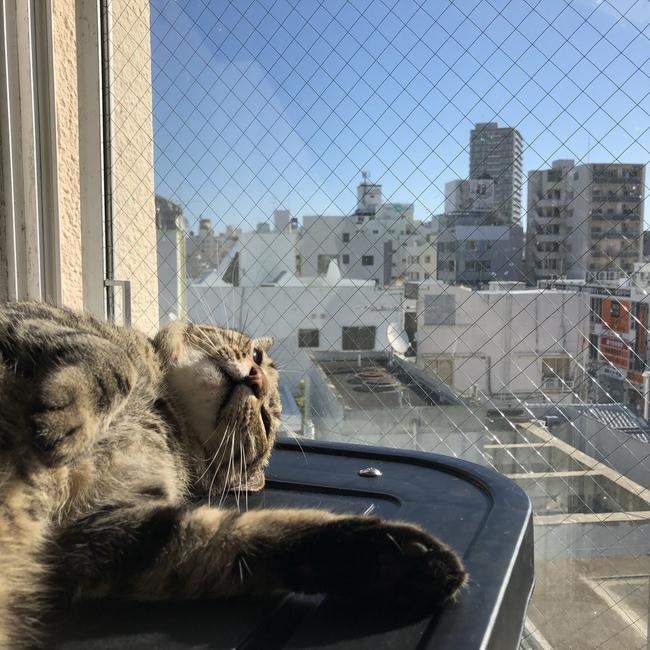 猫まる茶屋のカバー写真