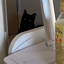 先月22日からトライアル。メス猫とオス猫の違い?
