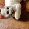 猫・人 大好き 穏やかで抜群な性格 コウくん